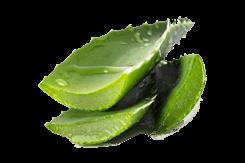 Aloe Vera Slices Green ingredient