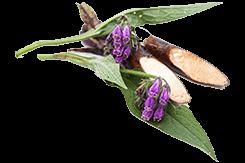 Allantoin Face mist leaf ingredient