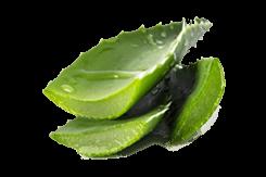 Hair Serum Amla ingredient